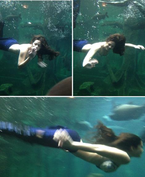 aquario sereias